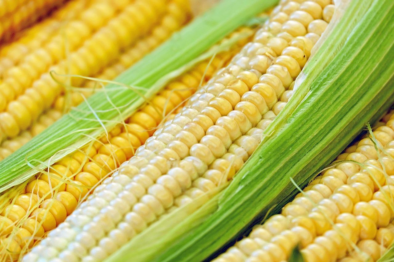 日露の遺伝子組換え食品事情